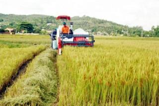Khuyến khích DN hợp tác với nông dân tổ chức sản xuất hàng hóa quy mô lớn