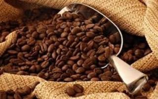 Giá cà phê trong nước giảm trở lại 200 nghìn đồng/tấn