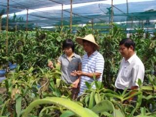 TP.HCM: Đẩy mạnh thu hút đầu tư vào nông nghiệp