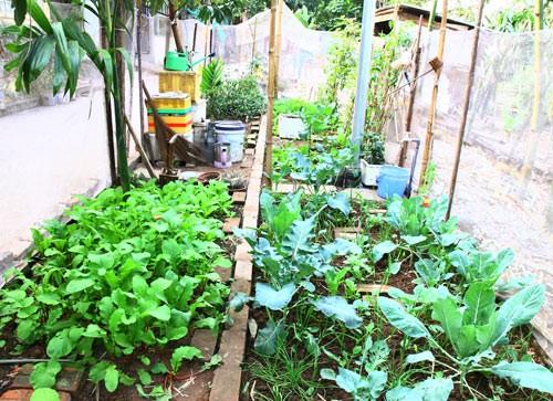 Vườn cà của bà tôi