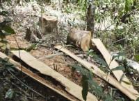 Đăk Lăk lại mất rừng