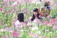 Trồng hoa để cho thuê