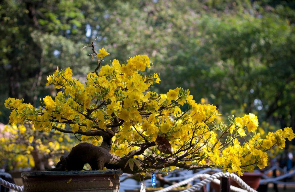Hội chợ Xuân Ất Mùi năm 2015