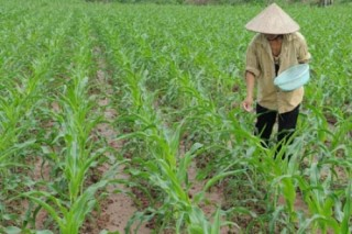 Áp thuế 5% với ngành phân bón: Gánh nặng đổ đầu nông dân