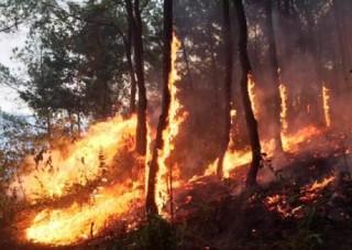 Hỗ trợ người dân khắc phục hậu quả do cháy rừng