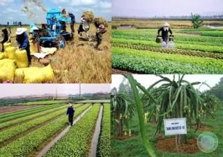 Vốn ngân hàng góp phần tái cơ cấu nông nghiệp nông thôn