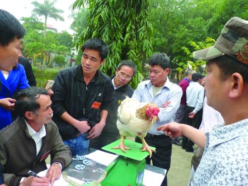Kỳ công săn thực phẩm sạch ăn Tết