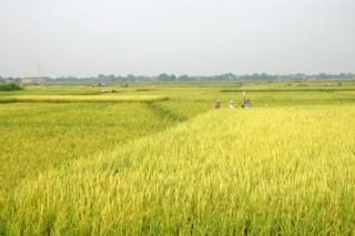 Đến năm 2020: Đất nông nghiệp chiếm 74,44% diện tích đất toàn tỉnh Vĩnh Long
