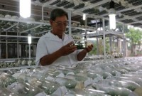 TP.HCM: Gần 836 tỷ đồng tín dụng ngân hàng cho nông nghiệp đô thị