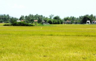 """Đồng vốn Agribank nơi """"đất phú, trời yên"""""""