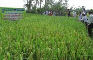 Kiên Giang: Hỗ trợ 65 tỷ đồng chuyển đổi mô hình hoạt động hợp tác xã