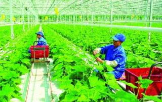 Dòng tiền đổ mạnh vào nông nghiệp