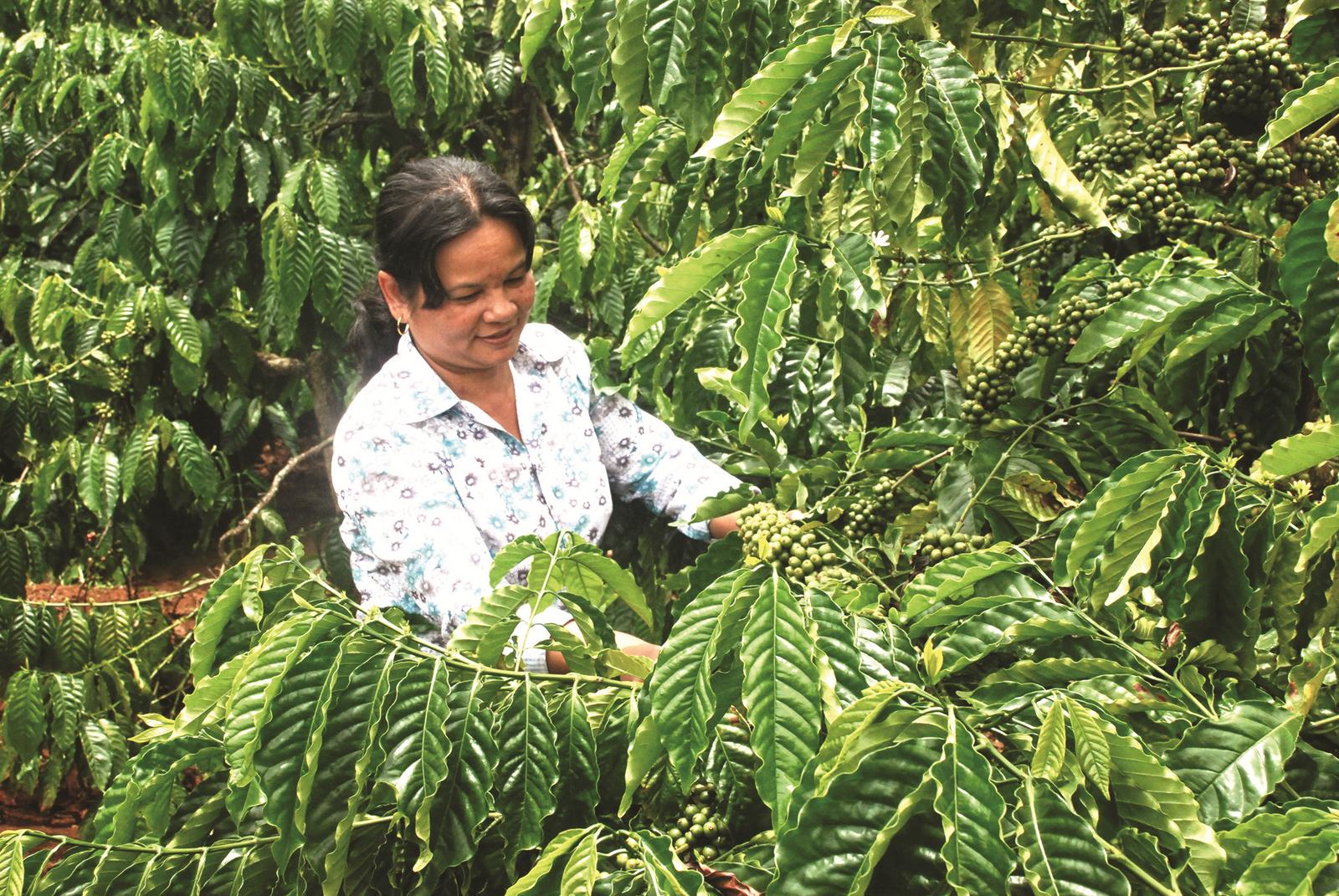 Chuyển đổi cây trồng để giảm tổn thất