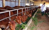 Chuyên nghiệp hóa ngành chăn nuôi
