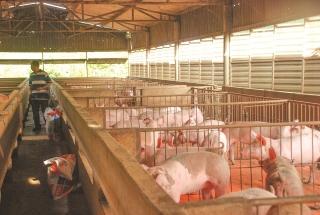 Tín hiệu tích cực từ tái cơ cấu ngành nông nghiệp