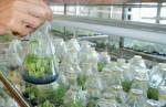 Hạ tầng cản bước FDI vào nông nghiệp