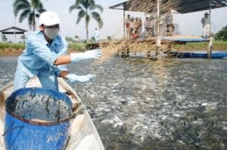 Cổ phiếu của thủy sản Hùng Vương bị đưa vào diện cảnh báo