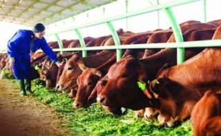 NHNN bắt tay triển khai gói tín dụng nông nghiệp công nghệ cao