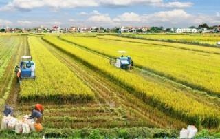 Trà Vinh: Chuyển 45,35 ha đất trồng lúa sang đất phi nông nghiệp