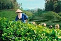 Nghiên cứu gói tín dụng 100 ngàn tỷ đồng cho nông nghiệp ứng dụng công nghệ cao