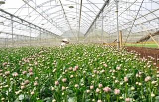 Trả lời kiến nghị về vay vốn tín dụng phát triển nông nghiệp công nghệ cao