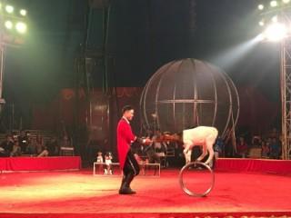 Đại hội Xiếc chào xuân mới 2018