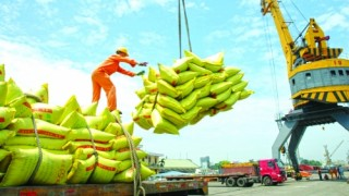 Gợi mở cho đầu tư ngành gạo