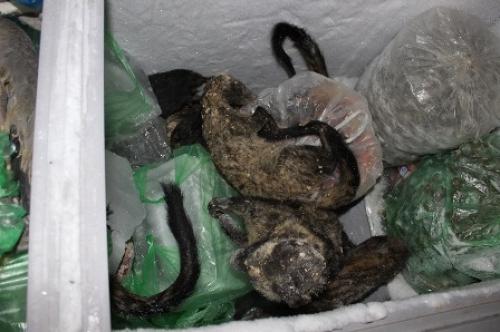 TP.HCM: Kiểm soát chặt buôn bán, phóng sinh động vật hoang dã