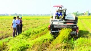 Triển vọng phát triển nông nghiệp công nghệ cao ở Quế Võ