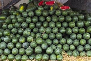Sacombank mua dưa hấu hỗ trợ nông dân