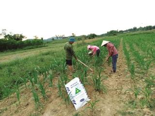 Ngành phân bón: Hưởng lợi khi nông nghiệp phục hồi