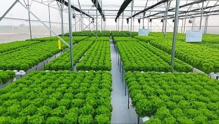 Nông nghiệp Hà Nội đẩy mạnh tái cơ cấu