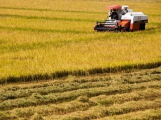Cho vay thu mua, tạm trữ gần 60.000 tấn lúa gạo