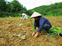 Dư nợ cho vay trồng rừng đạt gần 500 tỷ đồng