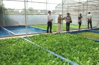 Ứng dụng công nghệ cao trong nông nghiệp: Cơ chế nào cho các hợp tác xã?