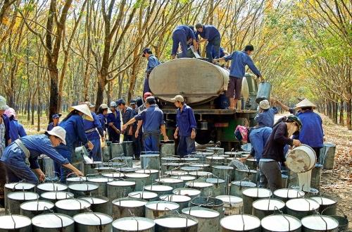 Ngày 21/3: Tập đoàn Cao su Việt Nam chính thức lên sàn UPCoM