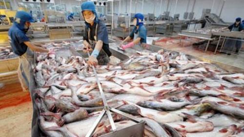 Hoa Kỳ chấp thuận hồ sơ kiểm soát cá da trơn Việt Nam