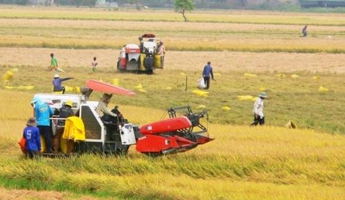 VietinBank đáp ứng đủ nguồn vốn cho doanh nghiệp thu mua lúa gạo