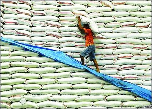 Agribank sẵn sàng đáp ứng vốn cho lúa gạo