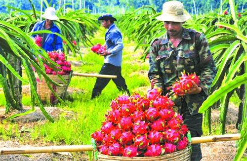 Xuất khẩu nông sản: Giữ vững thị trường trọng điểm