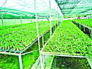 Nông nghiệp công nghệ cao thu hút đầu tư