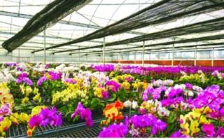 Agribank Lâm Đồng: Khơi thông nguồn vốn cho nông nghiệp công nghệ cao
