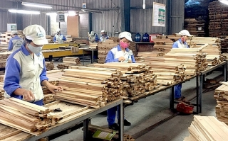 Cảnh báo rủi ro thương mại và rủi ro đầu tư trong ngành gỗ