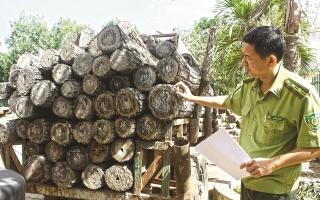 Gian nan cuộc chiến bảo vệ rừng