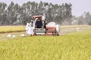 Luôn đảm bảo an ninh lương thực quốc gia