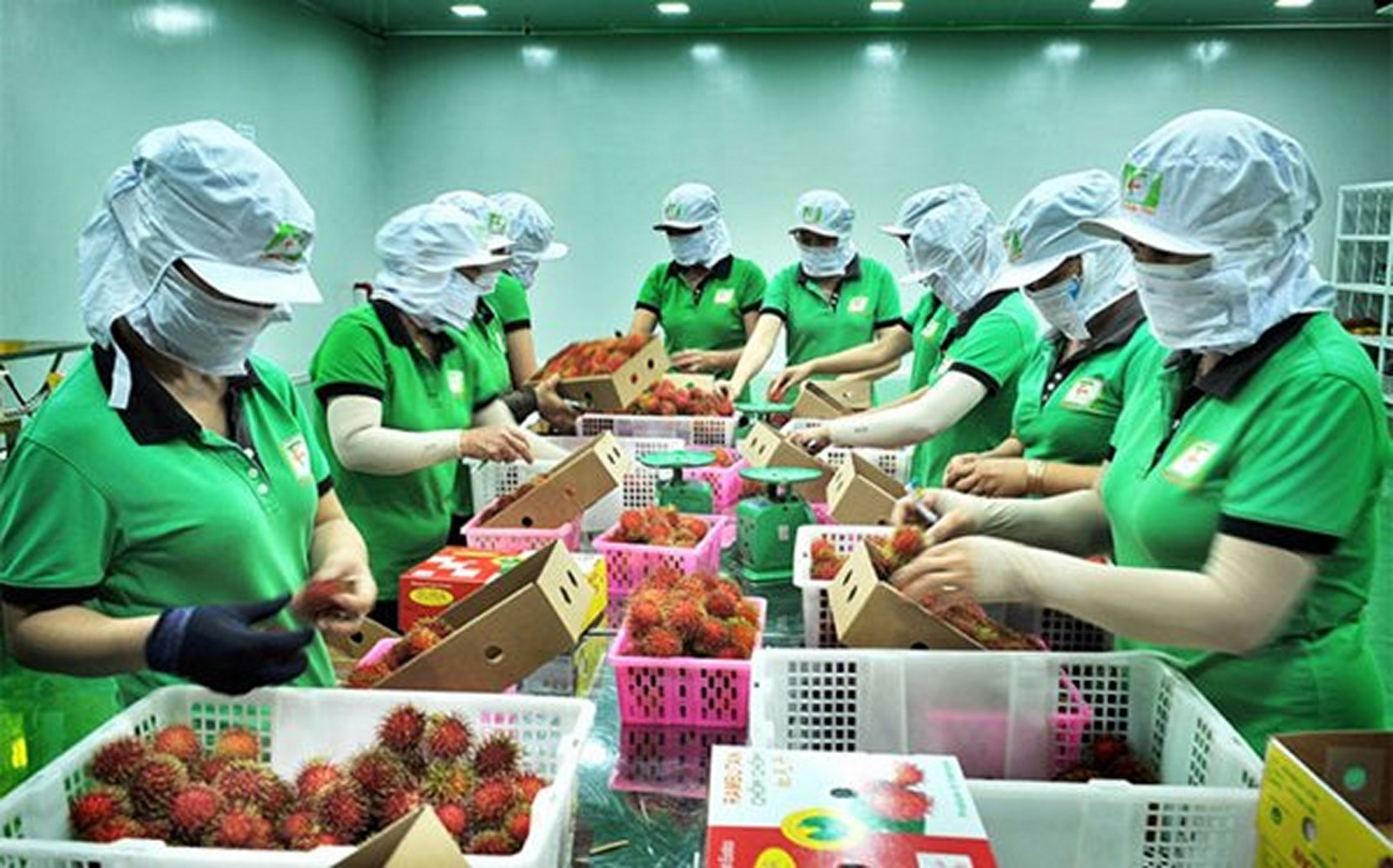 tang cuong hop tac nong nghiep viet nam new zealand