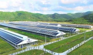 12 trang trại bò sữa 4.0 của Vinamilk được triển khai dùng năng lượng mặt trời