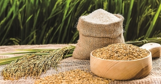"""Để hạt gạo thực sự trở thành """"hạt vàng"""""""