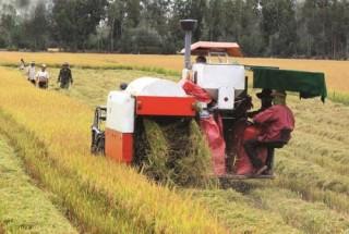 Cần đa dạng hóa tín dụng nông thôn