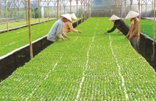 Tín dụng nông nghiệp cần đòn bẩy
